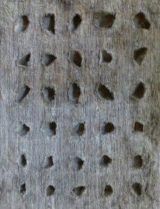 Imprint - Cast cattail, clay