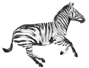 AZ Watercolor Zebra